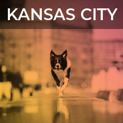 Kansas City Dog And Fountains