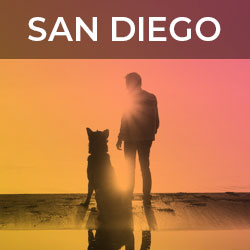 Your guide to sessions at Fetch dvm360 in San Diego   Fetch